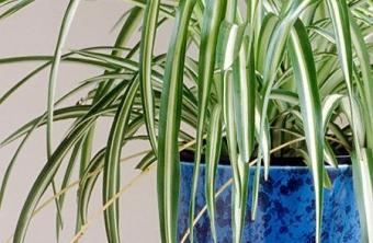 5 plantas que debes tener en casa