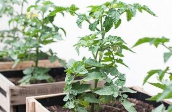 Guía práctica para crear un huerto en casa