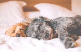 7 Hábitos para dormir mejor.