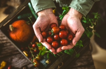 Agricultura Orgánica el regreso a casa.